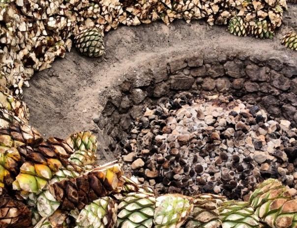 roasting-agave
